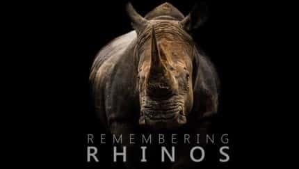 """""""Remembering Rhinos"""" unterstützt Hilfsprojekte für Nashörner"""