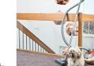 Entfernt Tierhaare gründlich und mühelos: Der THOMAS CYCLOON HYBRID Pet & Friends