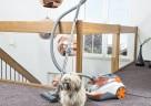 Die THOMAS Tierliebhaberstaubsauger lieben Hunde- und Katzenhaare.